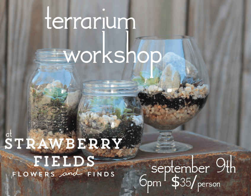 terrariumworkshop2