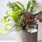 plantersmall