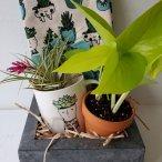 plantloverbox