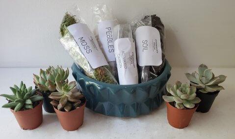 succulentplanterkit